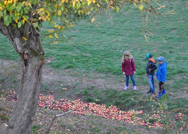 Apfelernte und Verarbeitung im RUZ Okt2018 Klassen 2a2bHP03