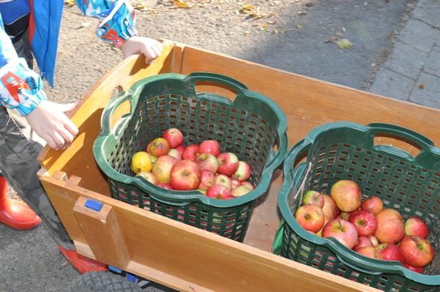 Apfelernte und Verarbeitung im RUZ Okt2018 Klassen 2a2bHP09